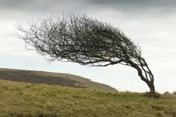 tree in wind
